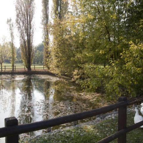 Laghetto del Parco dei Gorghi a Renazzo