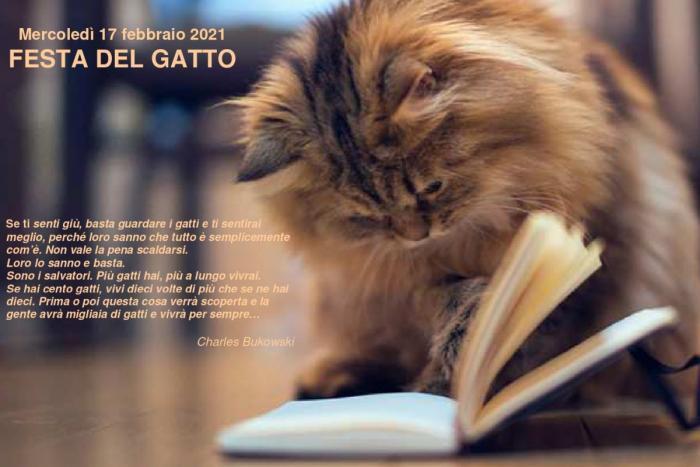 gatto siamese che con la zampa sfoglia una pagina del libro e frase di Charles Bukowski